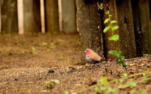 bird-wildlife-photography
