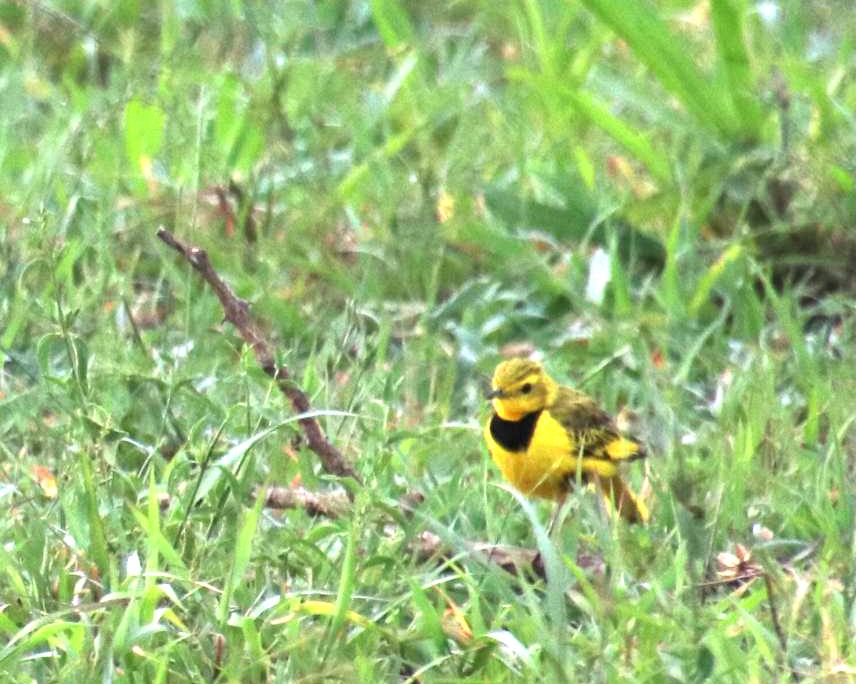 rare birds south africa