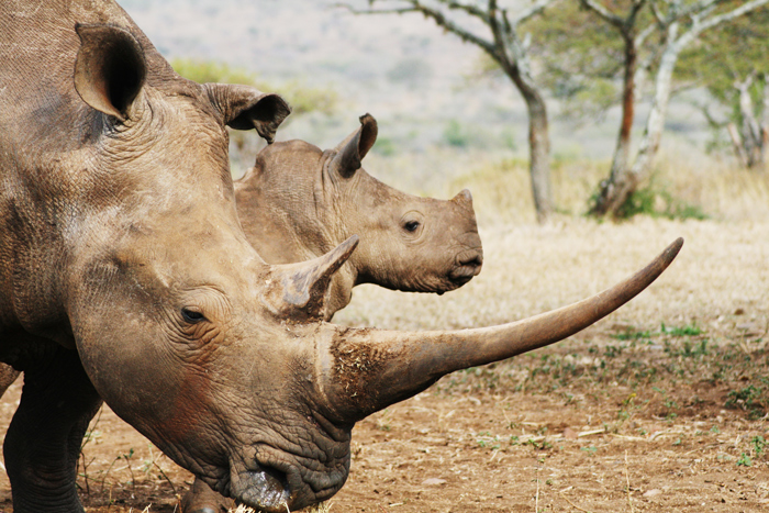 Rhino River Lodge takes rhino poaching personally