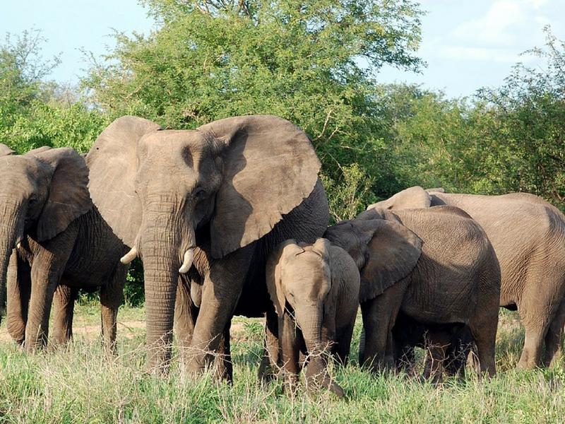 Tips for Taking Children on Safari